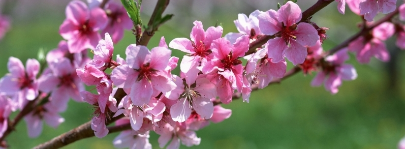spring_branch_wide77a926991e88